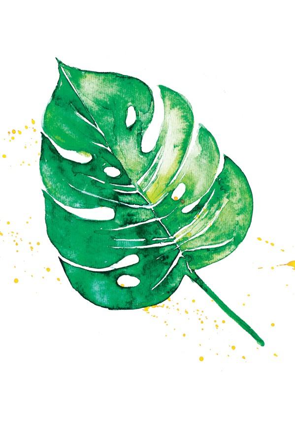 Atvirukas MONSTERA ŽALIOJI (akvarelė)